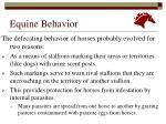 equine behavior5