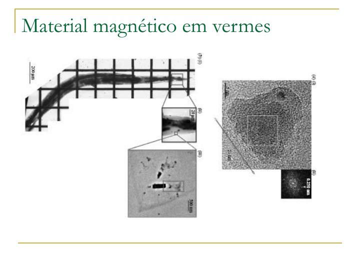 Material magnético em vermes