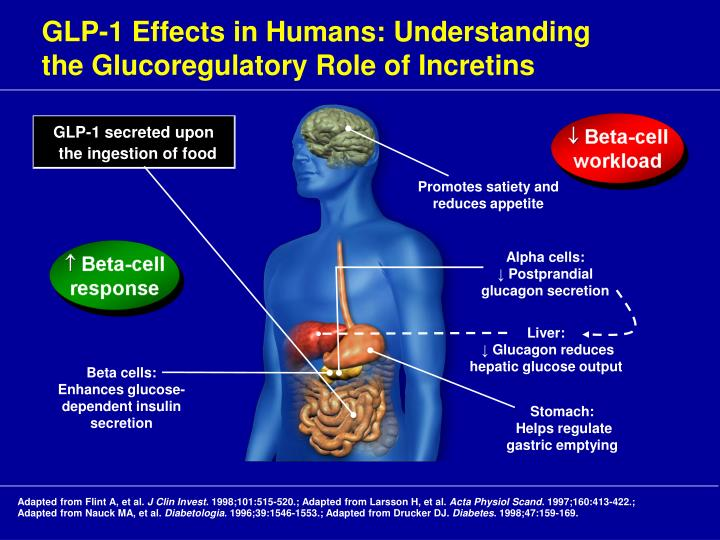 GLP-1 Effects in Humans: Understanding