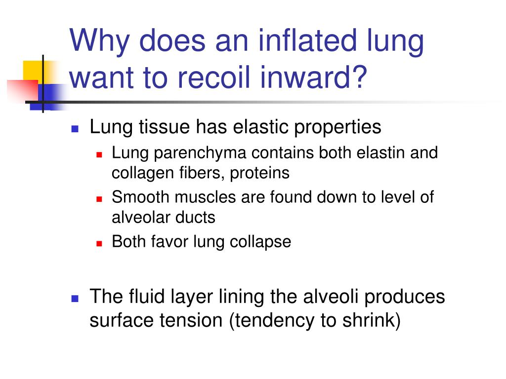 Why does an inflated lung want to recoil inward?