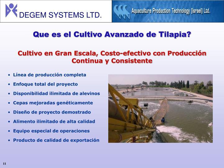 Que es el Cultivo Avanzado de Tilapia?