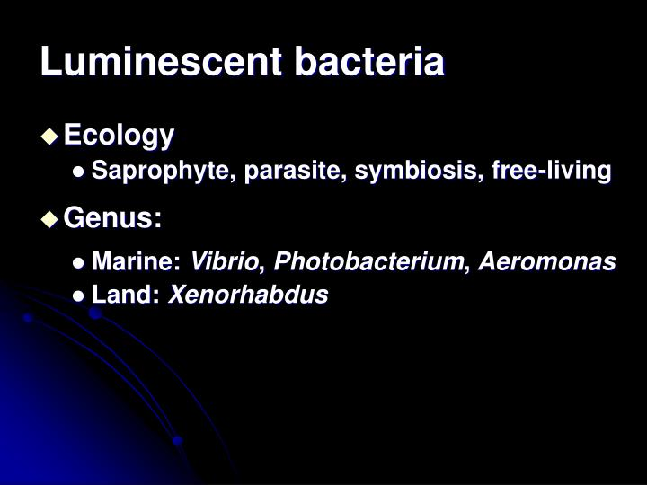 Luminescent bacteria