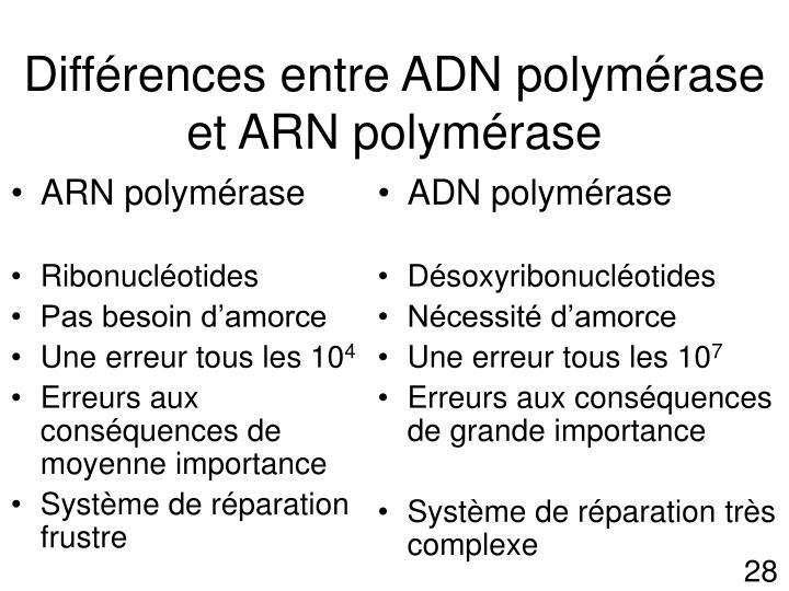 ARN polymérase