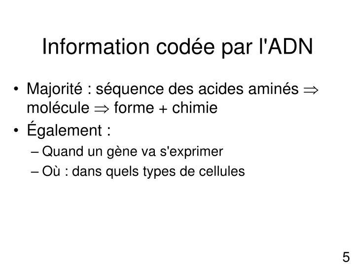 Information codée par l'ADN