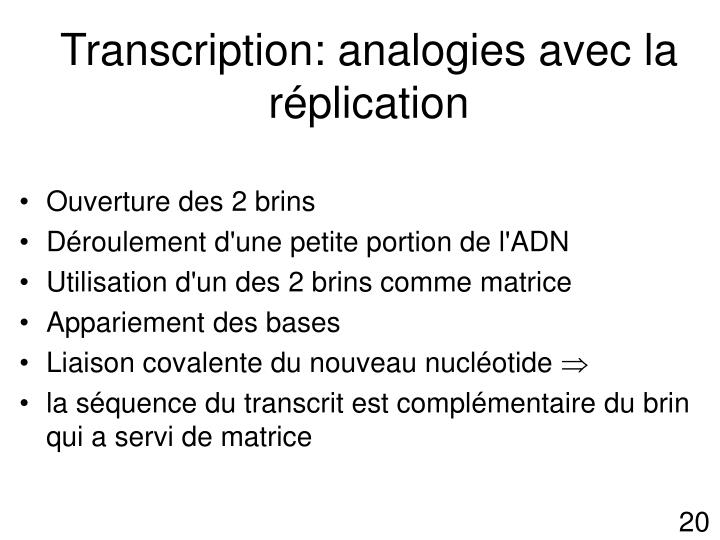 Transcription: analogies avec la réplication