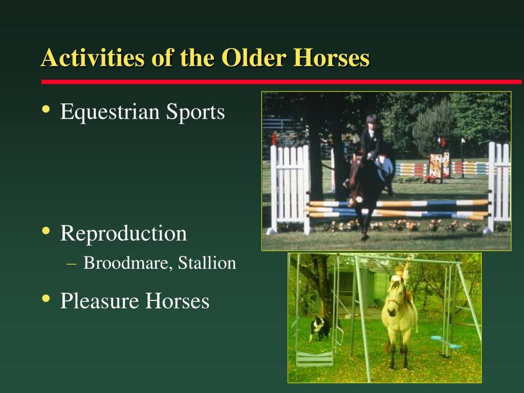 Activities of the Older Horses