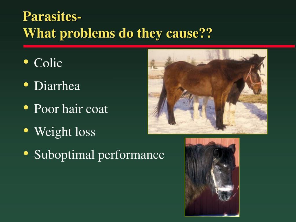 Parasites-