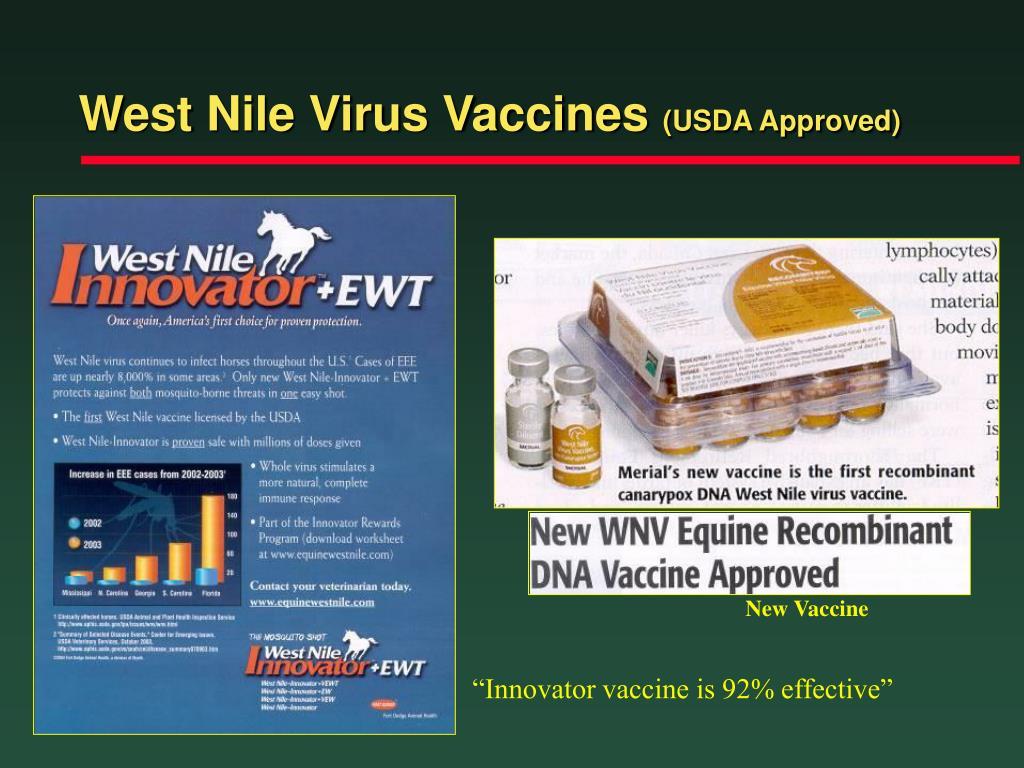 West Nile Virus Vaccines