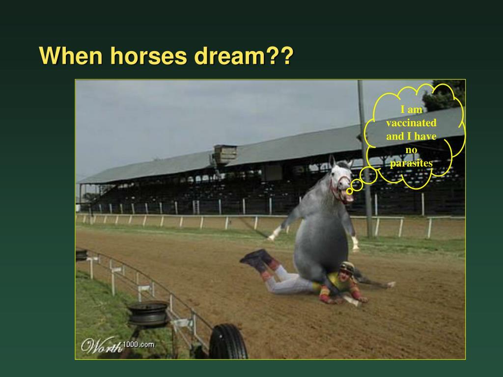When horses dream??