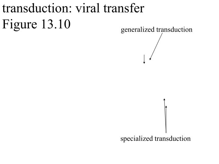 transduction: viral transfer
