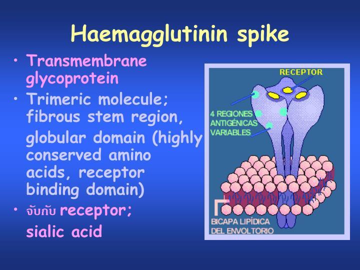 Haemagglutinin spike