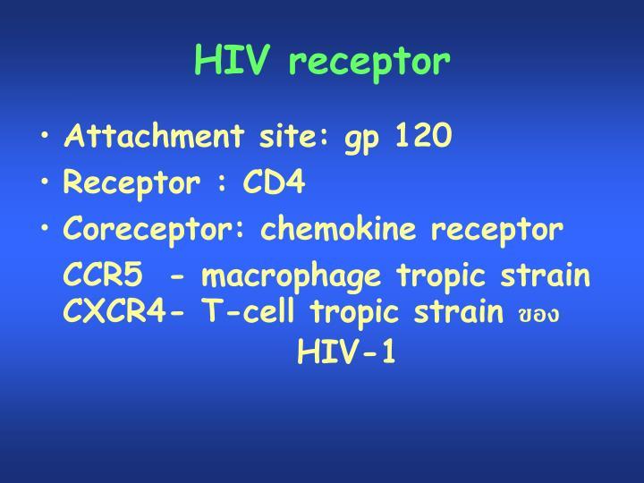 HIV receptor