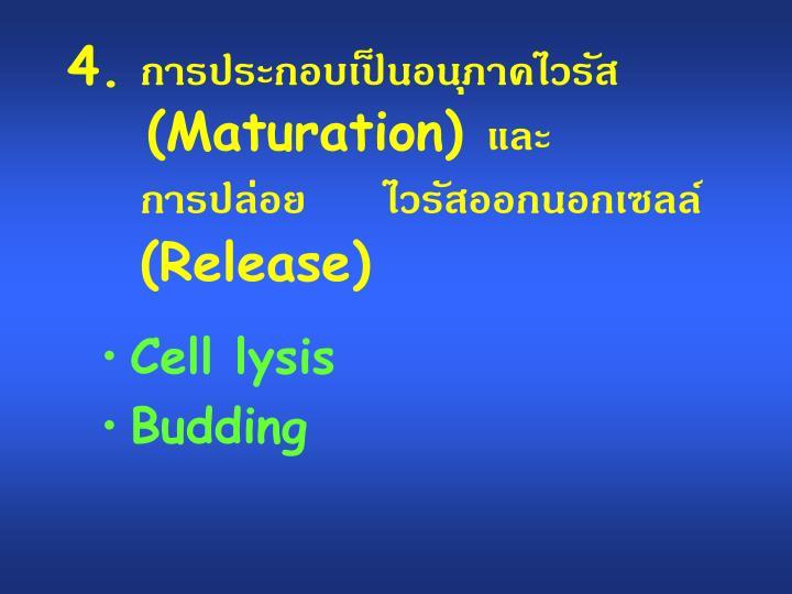 การประกอบเป็นอนุภาคไวรัส(Maturation) และ