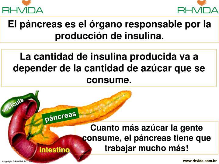 El páncreas es el órgano responsable por la producción de insulina.