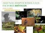 algunas adaptaciones a los factores bi ticos1