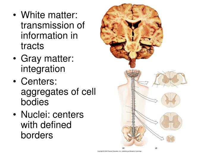 White matter: transmission of information in tracts