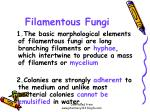 filamentous fungi