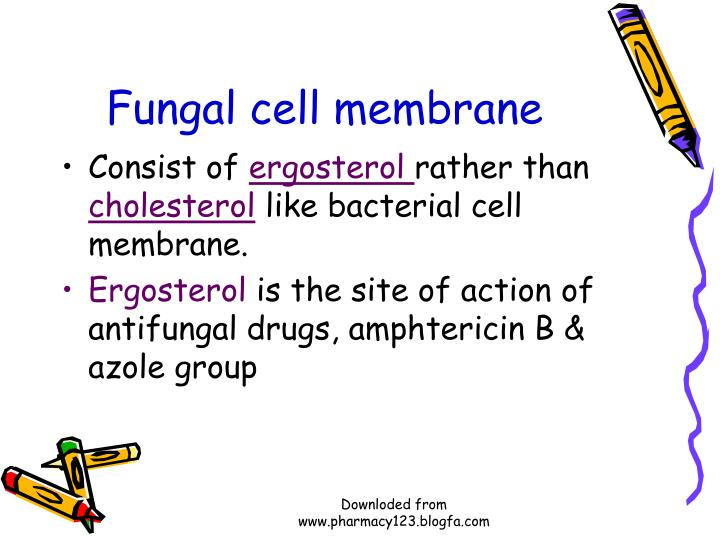 Fungal cell membrane