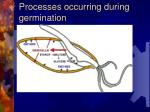 processes occurring during germination