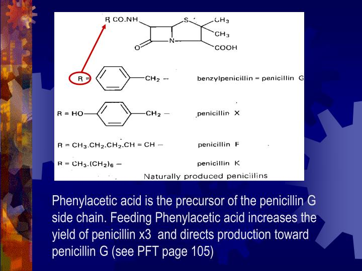 Phenylacetic acid is the precursor of the penicillin G side chain. Feeding Phenylacetic acid increases the yield of penicillin x3  and directs production toward penicillin G (see PFT page 105)