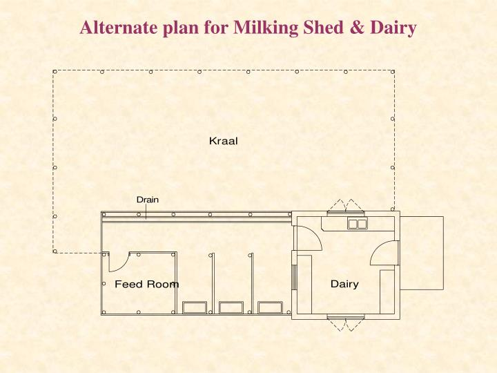 Alternate plan for Milking Shed & Dairy