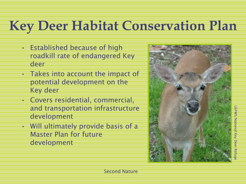 Key Deer Habitat Conservation Plan