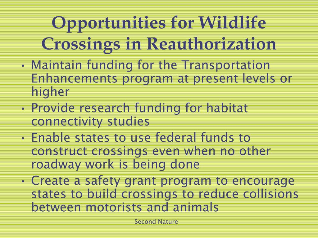 Opportunities for Wildlife Crossings in Reauthorization