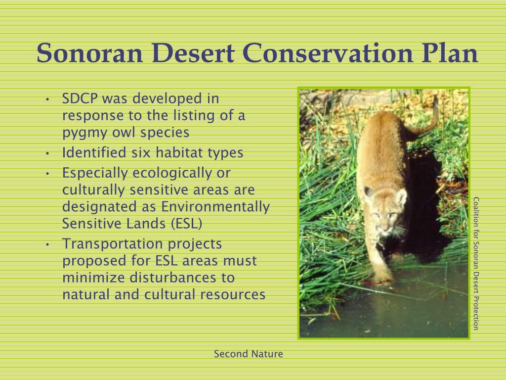 Sonoran Desert Conservation Plan