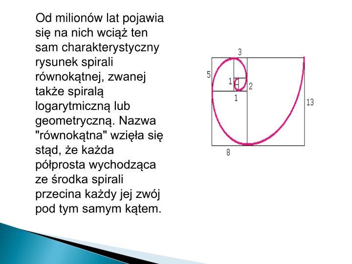 """Od milionów lat pojawia się na nich wciąż ten sam charakterystyczny rysunek spirali równokątnej, zwanej także spiralą logarytmiczną lub geometryczną. Nazwa """"równokątna""""wzięła się stąd, że każda półprosta wychodząca ze środka spirali przecina każdy jej zwój pod tym samym kątem."""