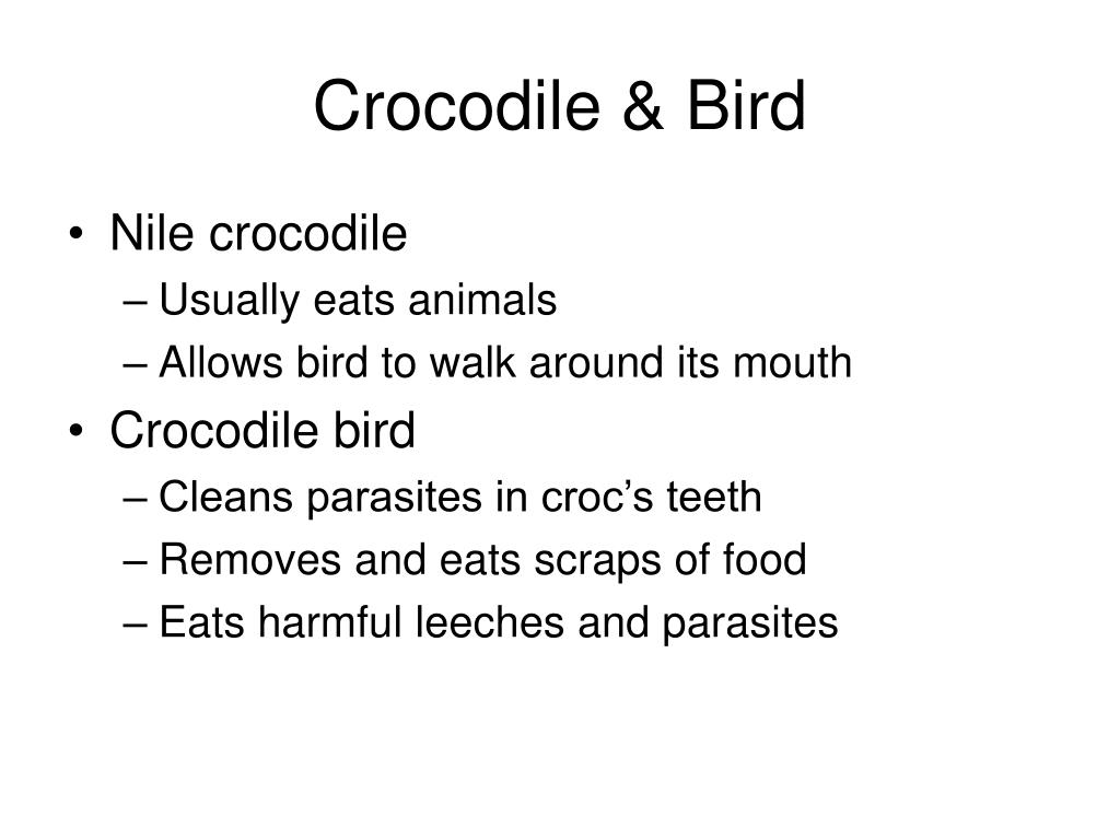 Crocodile & Bird