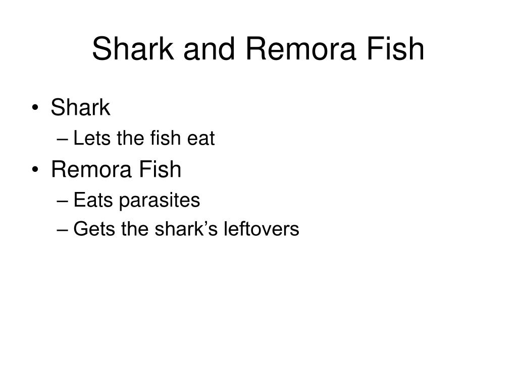 Shark and Remora Fish