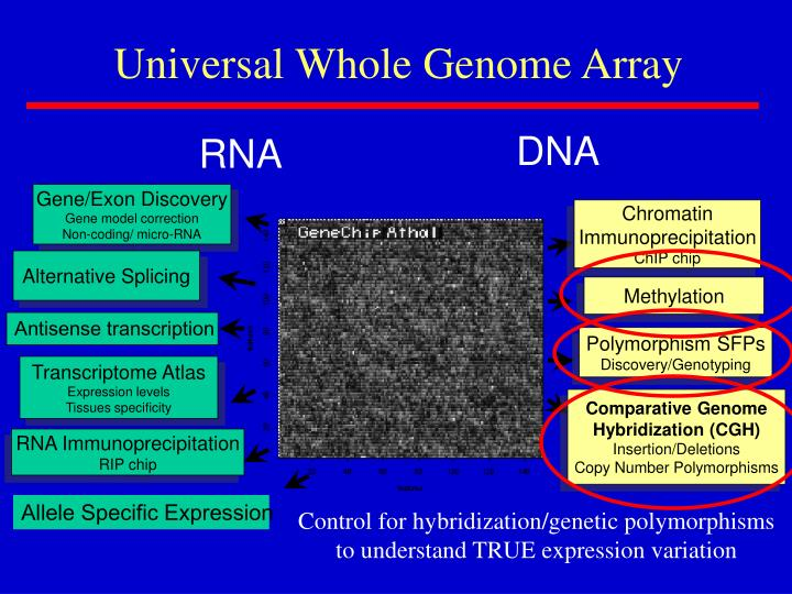 Universal Whole Genome Array