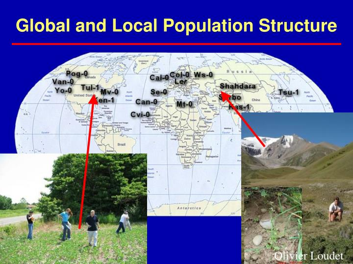 Global and Local Population Structure