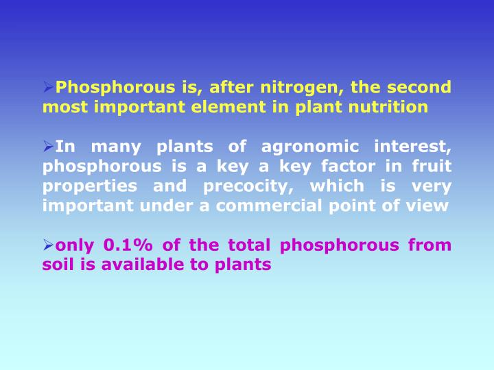 Phosphorous is, after nitrogen, the second