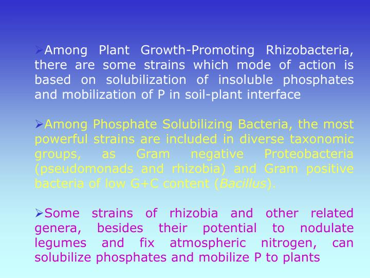 Among Plant Growth-Promoting Rhizobacteria, there are some strains which mode of action is based on solubilization of insoluble phosphates and mobilization of P in soil-plant interface