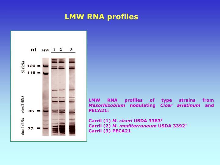 LMW RNA profiles