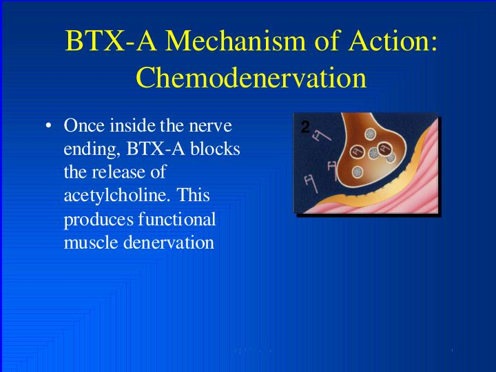 BTX-A Mechanism of Action: Chemodenorvation
