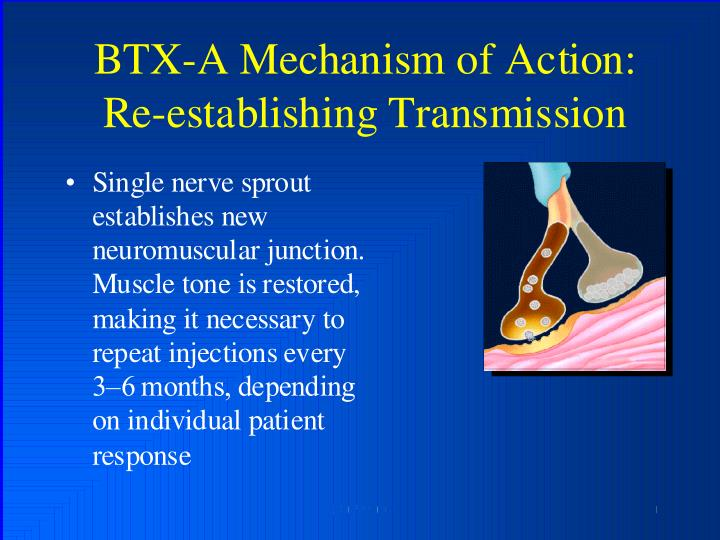 BTX-A Mechanism of Action: Re-establishing Transmission