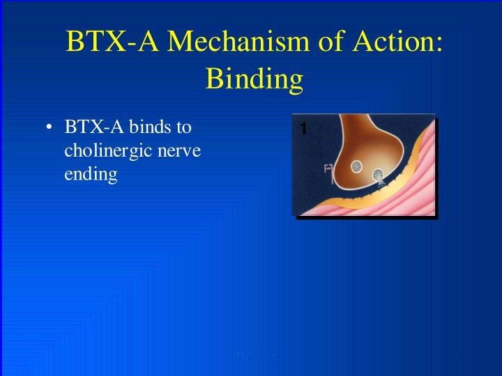 BTX-A Mechanism of Axtion: Binding
