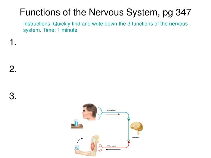 Functions of the Nervous System, pg 347