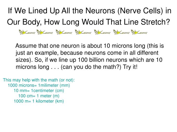 If We Lined Up All the Neurons (Nerve Cells) in Our Body, How Long Would That Line Stretch?