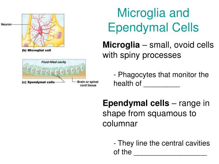 Microglia and Ependymal Cells