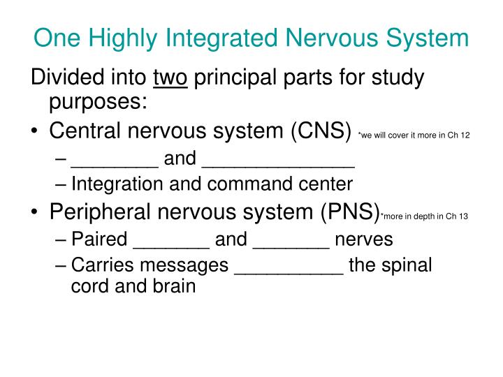 One Highly Integrated Nervous System