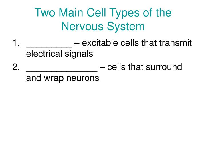 Two Main Cell Types of the Nervous System