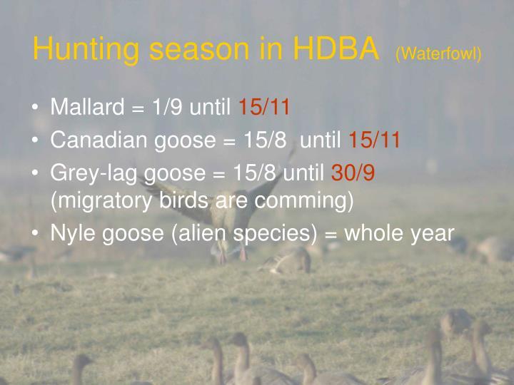 Hunting season in HDBA