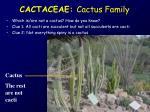 cactaceae cactus family
