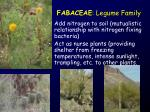 fabaceae legume family