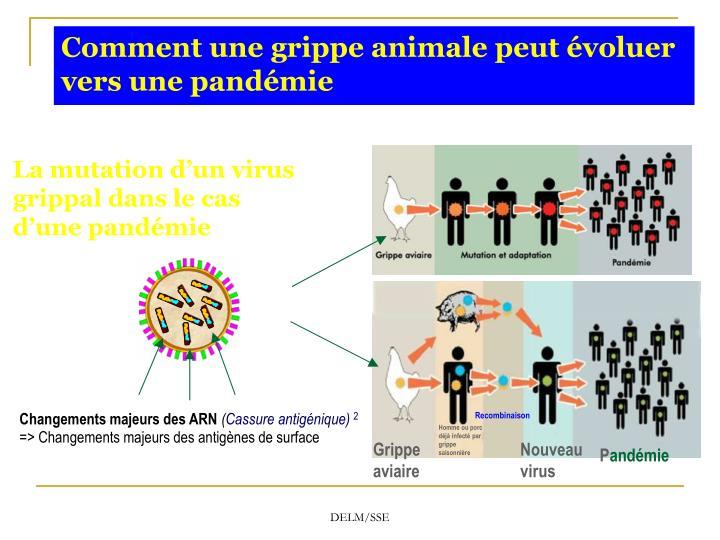Comment une grippe animale peut évoluer vers une pandémie