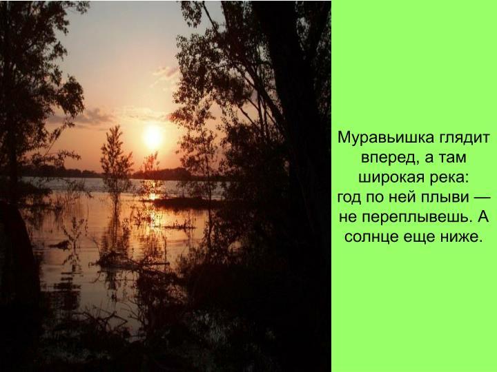 Муравьишка глядит вперед, а там широкая река: