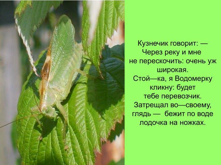 Кузнечик говорит: — Через реку и мне
